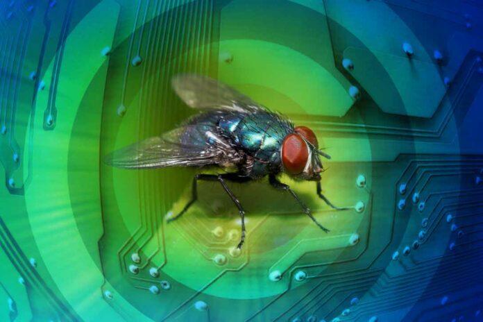 Bug bounty 2